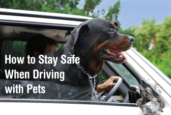 How to Stay Safe When Driving with Pets