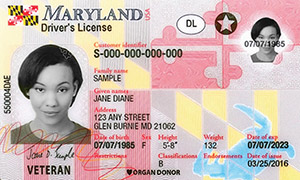 driver's license in Maryland