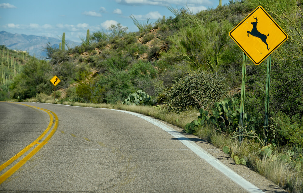 Deer Crossing Sign: What Does it Mean?